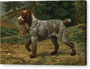 A Wire-haired Pointing Griffon Holds Canvas Print by Walter A. Weber