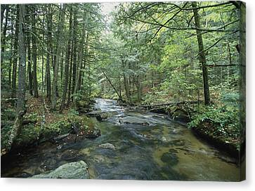 A Woodland View With A Rushing Brook Canvas Print by Heather Perry