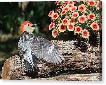 A Woodpecker Conversation Canvas Print by Sheila Brown