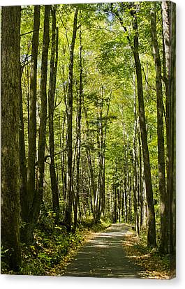 Canvas Print featuring the photograph A Woodsy Trail by Wanda Krack