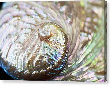 Abalone Shell Close-up Canvas Print