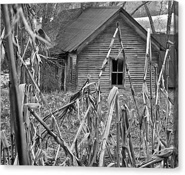 Abandoned Farmhouse Through Cornfield Canvas Print by Douglas Barnett