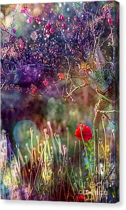 Abandoned Garden Canvas Print by Agnieszka Mlicka