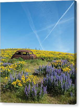 Abandoned In A Field Of Flowers Canvas Print by Angie Vogel