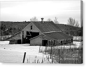 Maine Barns Canvas Print - Abandoned Maine Barn In Winter by Olivier Le Queinec