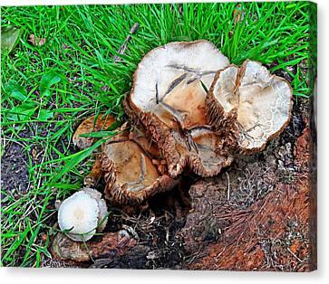 Abandoned Mushroom Crackhouse Canvas Print by Marco De Mooy