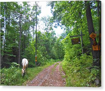 Canvas Print - Abandoned Road Scenic by Patricia Keller