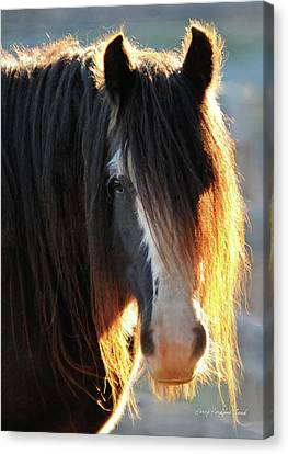 Gypsy Cob Canvas Print - Abbey Glowing by Terry Kirkland Cook