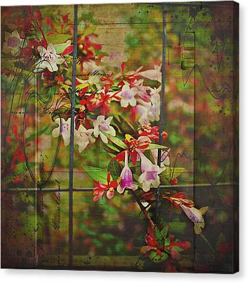Abelia Coming Through Canvas Print by Bellesouth Studio