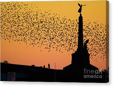 Risk Society Canvas Print - Aberystwyth Starlings by Keith Morris