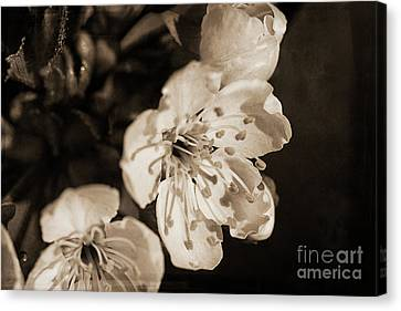 Canvas Print featuring the photograph Abiding Elegance by Linda Lees