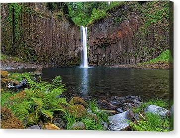 Abiqua Falls In Summer Canvas Print by David Gn