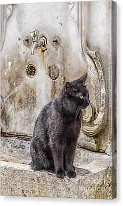 Ablution Taps Kitty Canvas Print by Antony McAulay