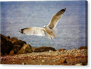 About To Land Canvas Print