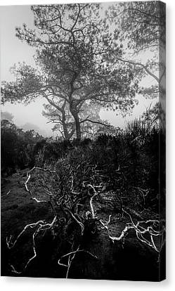Tree Roots Canvas Print - Above And Below by Joseph Smith