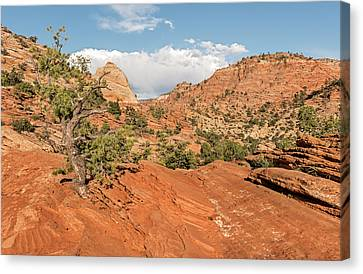 Above Zion Canyon Canvas Print