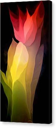 Abstract 082312 Canvas Print