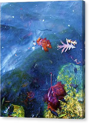 Abstract Water And Fall Leaves Canvas Print - Abstract-10 by Todd Sherlock
