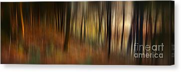 Autumn Forest Canvas Print by Rod McLean