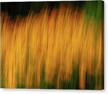 Abstract Black Eyed Susan Field Canvas Print by Juergen Roth