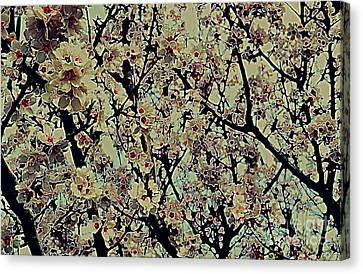 Abstract Blossoms Canvas Print