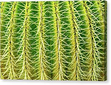Abstract Cactus Canvas Print by Delphimages Photo Creations