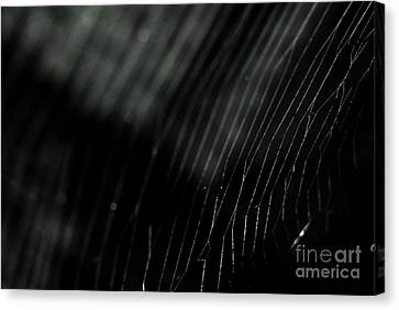 Canvas Print featuring the photograph Abstract Cobweb by Yurix Sardinelly