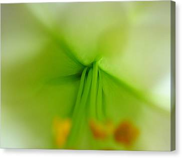 Abstract Easter Lily Petals Canvas Print by Juergen Roth