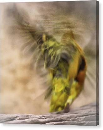 Abstract Finch Canvas Print