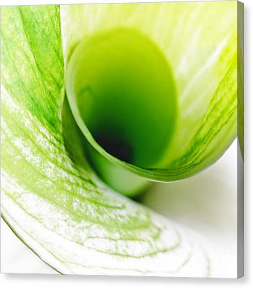 Abstract Green Wite Flowers Macro Photography Art Work Square Canvas Print by Artecco Fine Art Photography