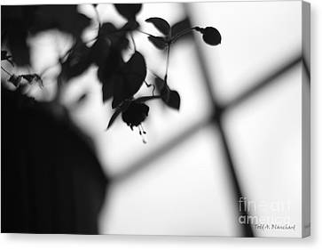 Abstract Flowers Canvas Print by Todd A Blanchard