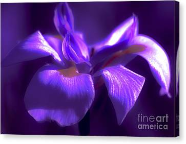 Abstract Iris Canvas Print