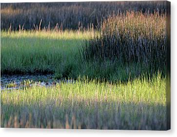 Canvas Print featuring the photograph Abstract Marsh Grasses by Bruce Gourley