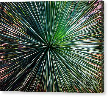 Abstract Nature Desert Cactus Photo 207 Blue Green Canvas Print