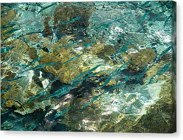 Abstract Of The Underwater World. Production By Nature Canvas Print by Jenny Rainbow