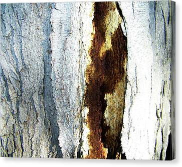 Canvas Print featuring the photograph Abstract One by Lenore Senior