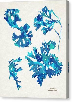 Abstract Seaweed Art Rhodomenia Laciniata Canvas Print by Christina Rollo