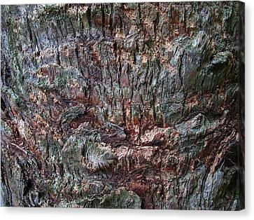 Abstract Tree Bark Canvas Print by Juergen Roth