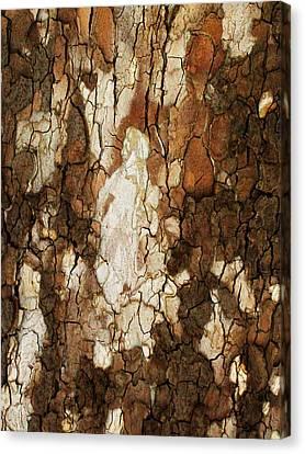 Abstract Tree Bark Canvas Print by Marsha Heiken