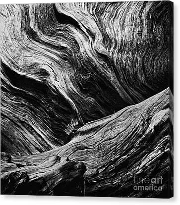Abstract Tree Lll - Black And White Canvas Print by Hideaki Sakurai