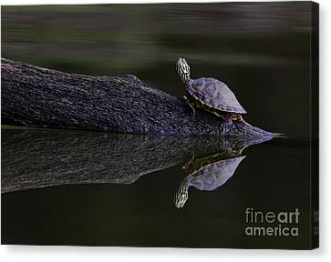 Canvas Print featuring the photograph Abstract Turtle by Douglas Stucky