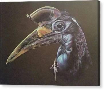 Abyssinian Hornbill Canvas Print by Tami Hughes