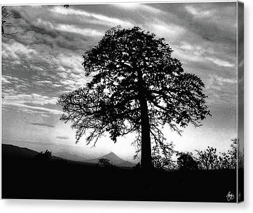 Canvas Print featuring the photograph Acacia And Volcano Silhouetted by Wayne King