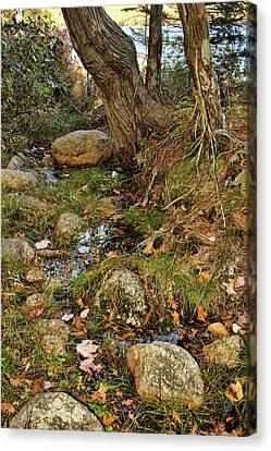 Acadia Fall Foliage Canvas Print by Alexander Mendoza