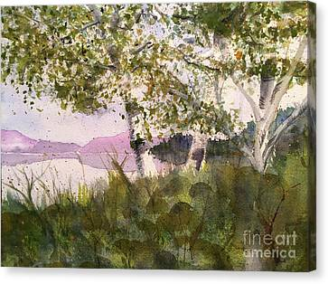 Acadia Morning Canvas Print by Maura Satchell