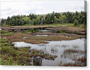 Acadia Park Series Canvas Print