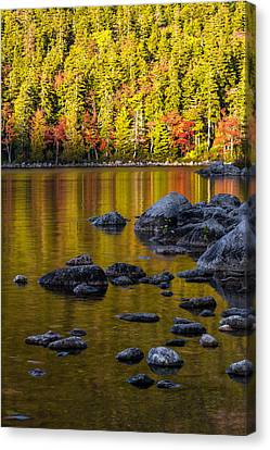 Maple Canvas Print - Acadian Glow by Chad Dutson