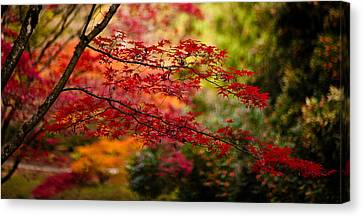 Northwest Canvas Print - Acer Colors by Mike Reid