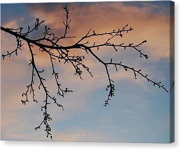 Across A December Sky Canvas Print by Marilynne Bull