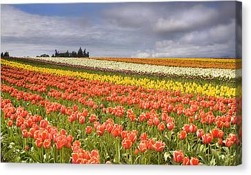 Across Colorful Fields Canvas Print